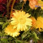 ふらわー`s :ガーベラ・黄色