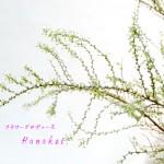 誕生花:雪柳