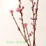 誕生花:桃